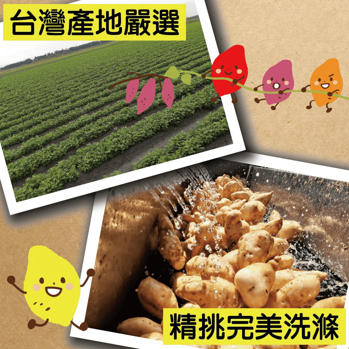 【田食原】新鮮栗子冰烤地瓜 800g 日本品種  養生健康 減醣必備 健身餐  低熱量 低GI 3